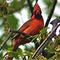 Arlington Cardinal News