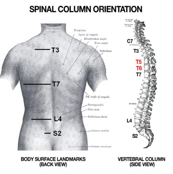 spinal-orientation