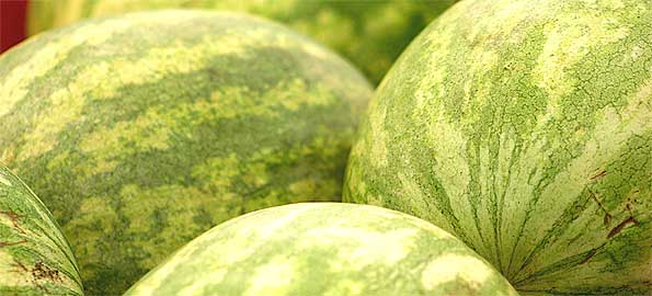 Watermelons-595x270
