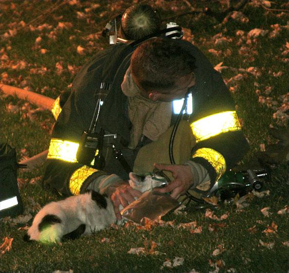 firefighter-cat-O2b