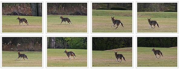 Coyote Memory Gardens November 2010
