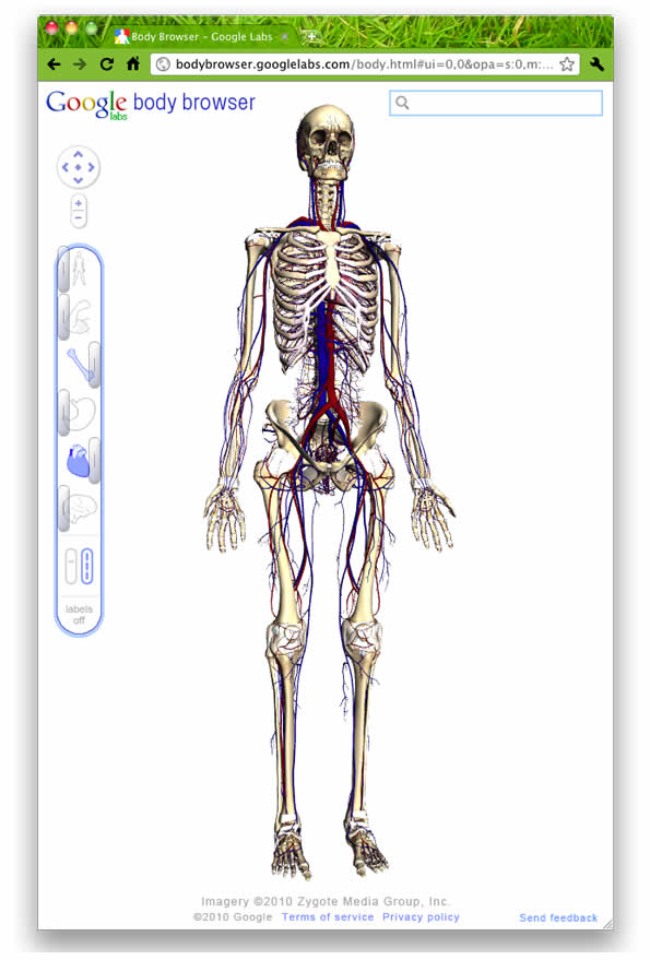 Human Body Map Google Labs Body Browser Does For Body What Google