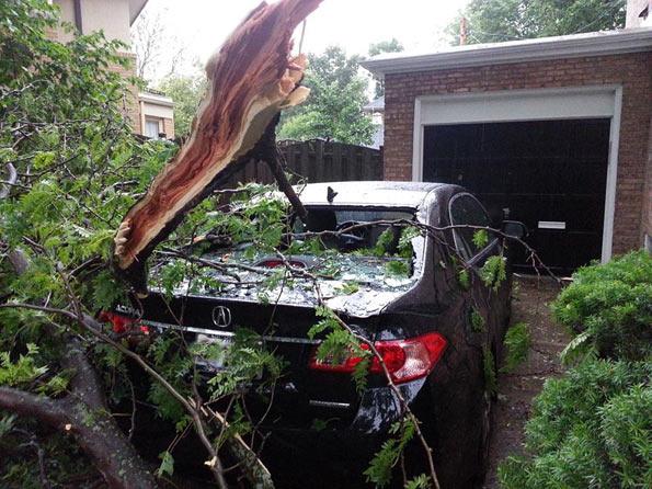 Tree on Acura