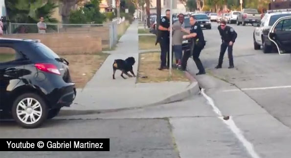 RottweilerMartinez
