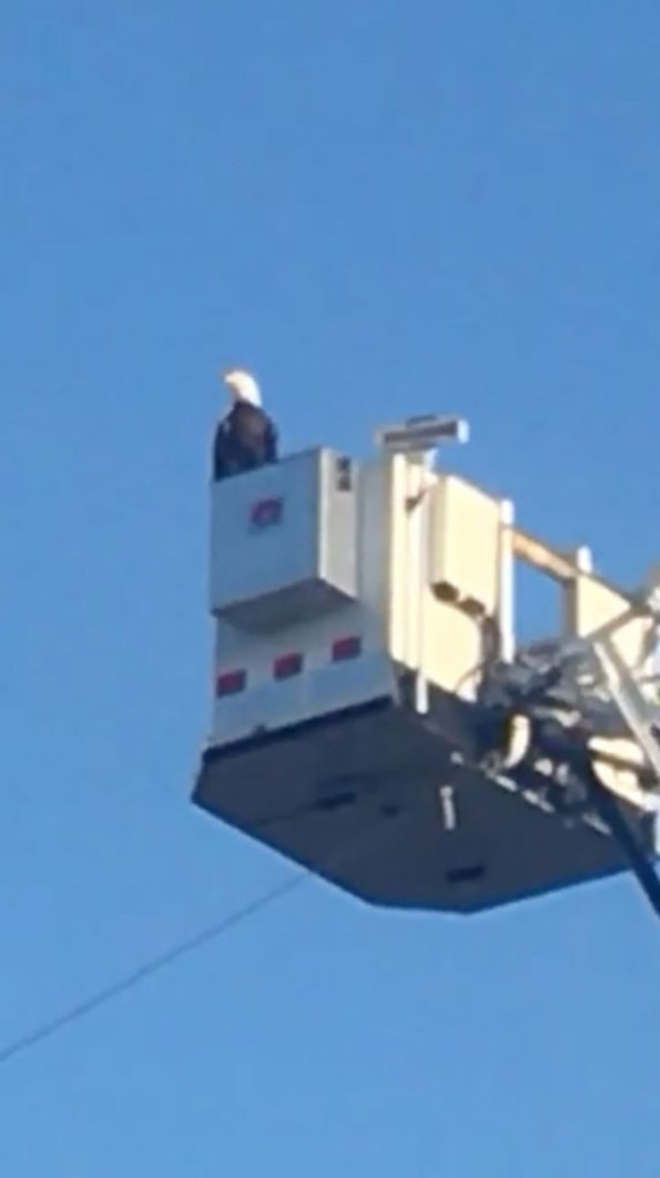Eagle on Aerial Andover Fire Department