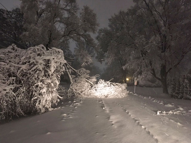 Tree down Olive Street near Windsor Drive