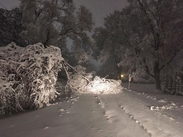 Tree down Olive Street near Windsor Drive