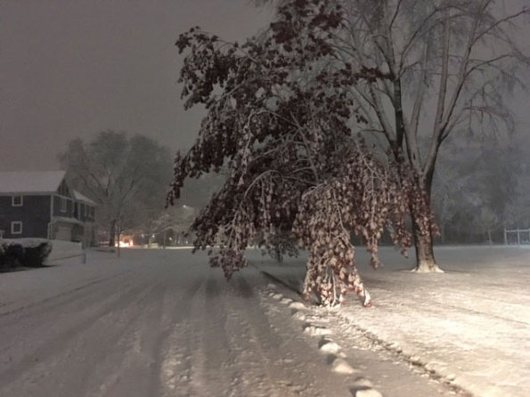 Tree drooping on Douglas Avenue at Greens Park in Arlington Heights