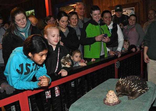Short-Beaked Echidna Birthday Brookfield Zoo