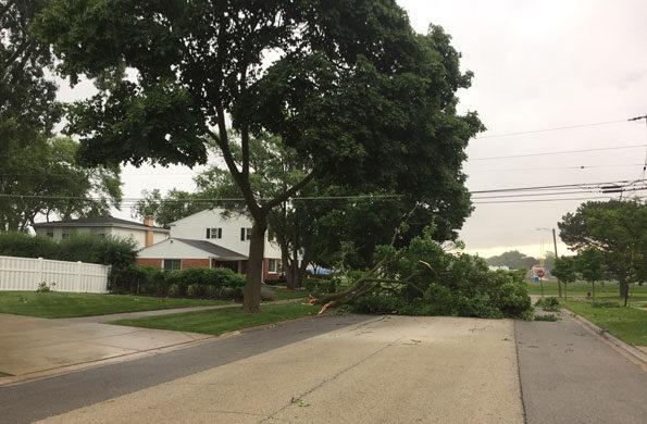 Tree branch down across Grove Street Arlington Heights