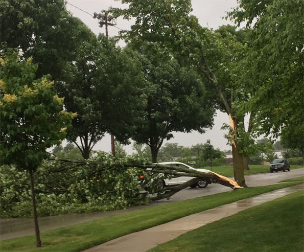 Tree branch down on Gregory Street, Arlington Heights