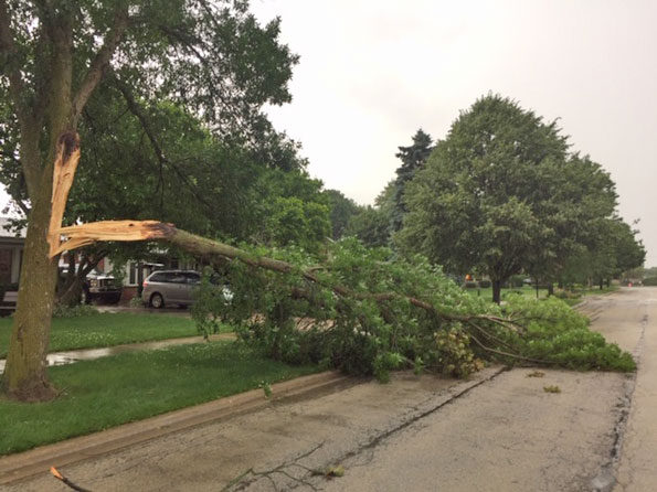 Tree branch  down on Evanston Avenue Arlington Heights