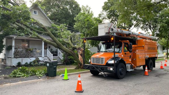 Asplundh crew removing downed tree on power line in Arlington Heights