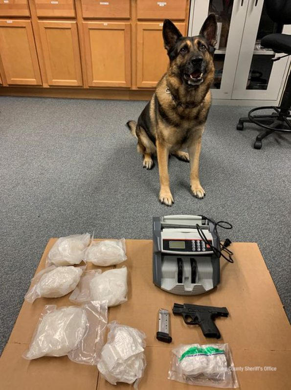 K9 Duke after discovery of 5 LBS of meth (SOURCE: Lake County Sheriff's Office)