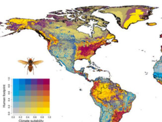 Climate Suitability of Asian Giant Hornet (SOURCE: Proceedings of the National Academy of Sciences of the United States of America | Assessing the ecological niche and invasion potential of the Asian giant hornet)