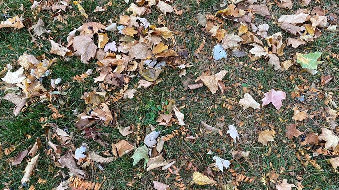 Leaves early November, 2020