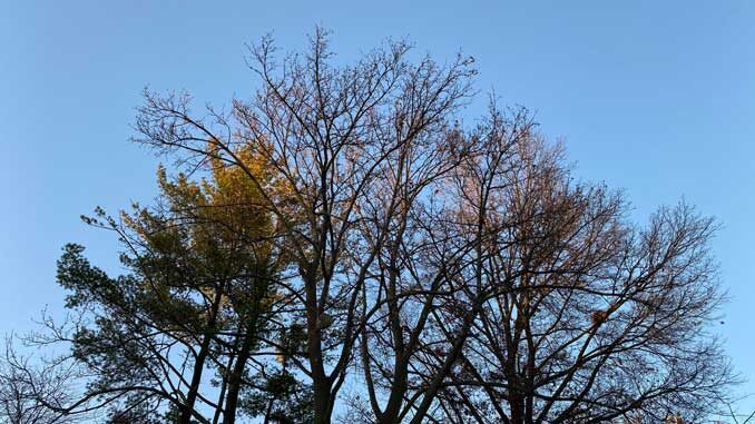 Clear skies and sun in the trees just before sunset