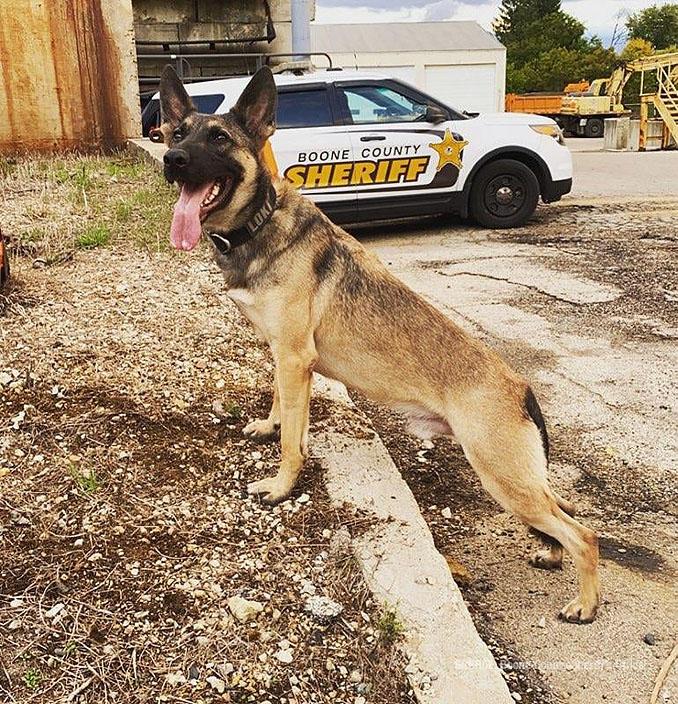 K-9 Loki (SOURCE: Boone County Sheriff's Office)