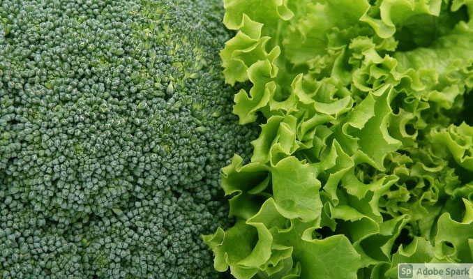 Broccoli and lettuce (by Shutterbug75)