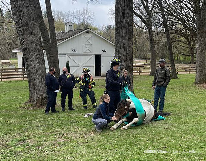 American Painted Horse rescue in Barrington Hills on Wednesday, April 21, 2021