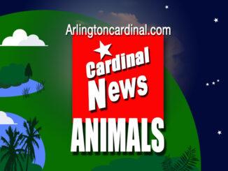 Arlington Cardinal Thumbnail ANIMALS
