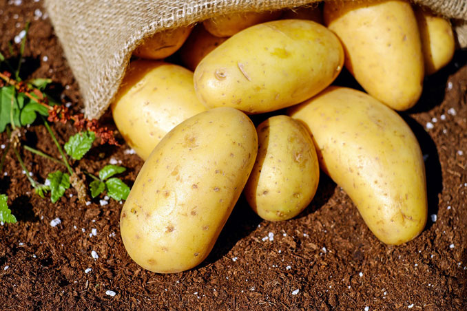 """Potatoes with burlap (Image by <a href=""""https://pixabay.com/users/couleur-1195798/?utm_source=link-attribution&utm_medium=referral&utm_campaign=image&utm_content=1585075"""">Couleur</a> from <a href=""""https://pixabay.com/?utm_source=link-attribution&utm_medium=referral&utm_campaign=image&utm_content=1585075"""">Pixabay</a>)"""